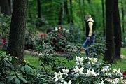 Zoo v Ostravě se může chlubit největší koncentrací rododendronů v celé České, ale i Slovenské republice.