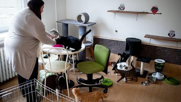 Moravskoslezský spolek na ochranu zvířat buduje azyl pro opuštěné kočky v Mariánských horách, 9. března 2020 v Ostravě. Členka spolu Jitka Kynčáková.