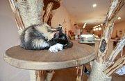 Čauky Mňauky Cafe - kočičí kavárna