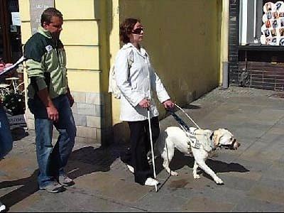V centru Ostravy se v sobotu uskutečnila soutěž vodicích psů pro nevidomé a slabozraké
