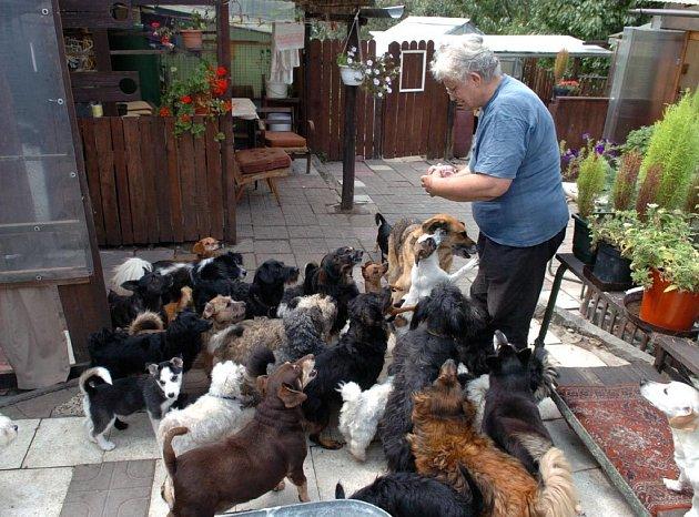Domov pro týrané a opuštěné psy