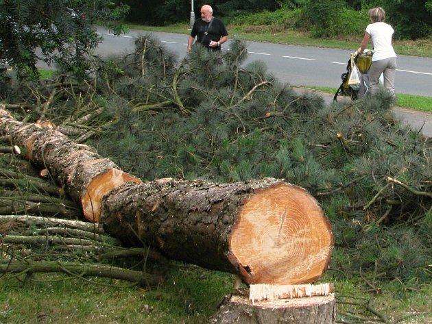 V ulici Zdeňka Štěpánka v Porubě se v těchto dnech rekonstruuje vodovod, v místě prací mu však stály čtyřicetileté stromy. Včera ráno je proto technici pokáceli.