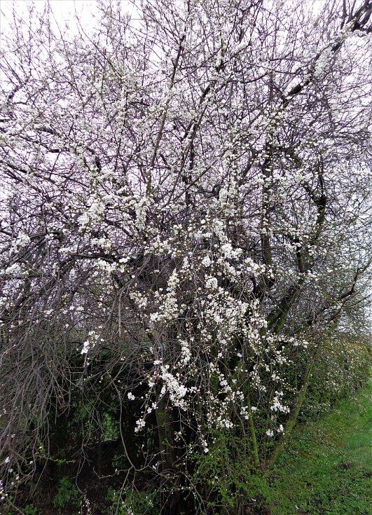 Květiny v dubnu 2021.