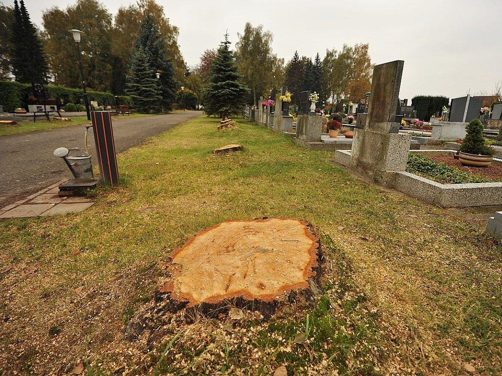 HŘBITOV V POLANCE. Po starých a vzrostlých stromech zůstaly jen pařezy.