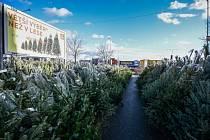 Prodej vánočních stromků na parkovišti u bývalého Baumaxu v Avion Shopping parku v Ostravě.
