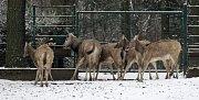 Zvířata v ostravské zoo v zimě regenerují. Chladnější počasí láká ven i exotická zvířata.