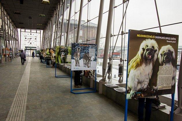 Snímky zvýstavy ostravské zoo na vlakových nádražích.