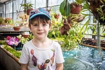 Výstava masožravých rostlin v Botanické zahradě OU, 15. června 2019 v Ostravě.
