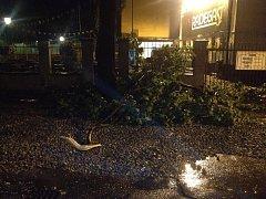 Následky noční bouřky. Spadlý strom u restaurace Spolek v Ostravě.