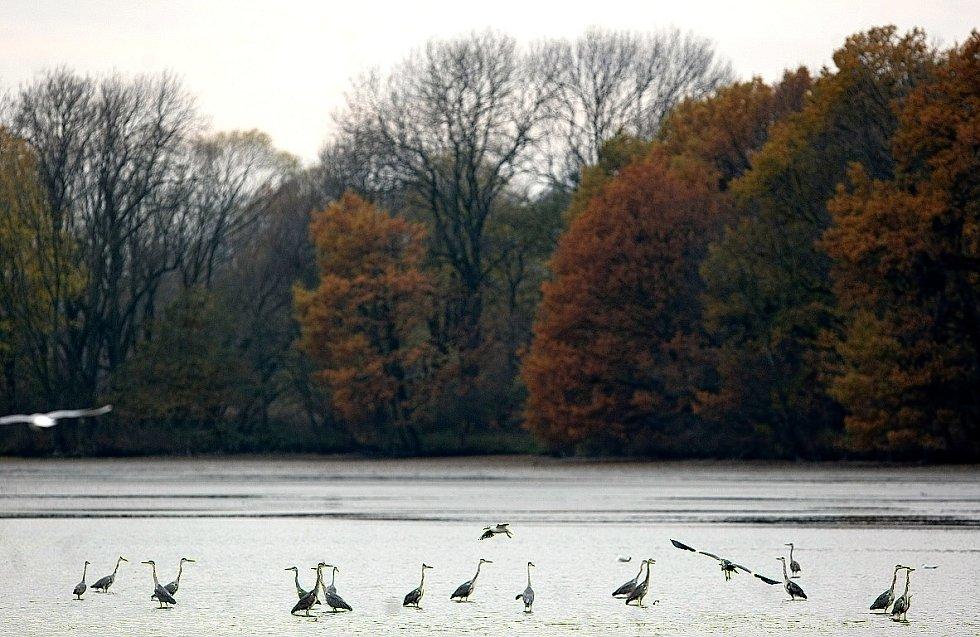 Výlov největšího rybníka Bezruč