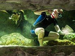 Čištění akvárií v ostravské zoo.