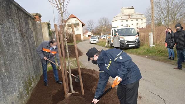 Sázení stromů s podporou Nadace ČEZ - Příbor.