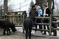 Všechny děti dostaly na Štědrý den dárek také v ostravské zoologické zahradě. Připraven pro ně byl nejen vstup zdarma, ale užít si mohly také mimořádné štědrovečerní krmení hrochů v pavilonu Tanganika.