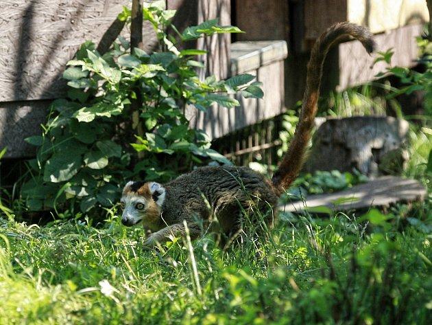 Do ráje lemurů mohou návštěvníci vstoupit na jednu hodinu denně. Na to, aby se chovali, jak mají, dohlížejí dobrovolníci.