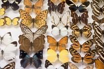 Motýli se dlouhodobě těší zájmu vědců i amatérských entomologů, proto patří k nejprobádanějším skupinám hmyzu, alespoň co se evropské fauny týká.