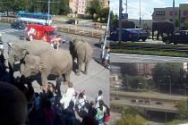 Snímky slonů na silnici.