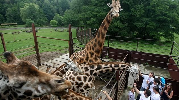Zoo Ostrava. Ilustrační foto