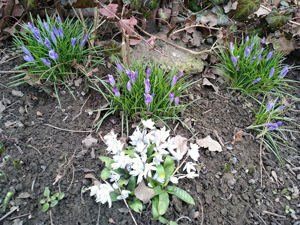 Jaro se blíží i do Ostravy-Hrabůvka.