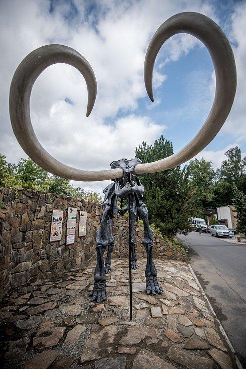 Představení kosterní modelu mamuta srstnatého v Zoologické zahradě Ostrava, 15. srpna 2018 v Ostravě.