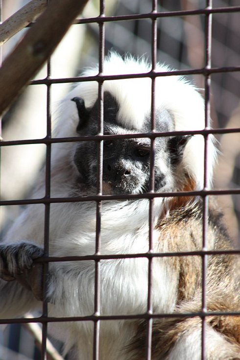 Jaro v Zoo Ostrava, březen 2017. Ilustrační foto.