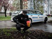 Do celorepublikové Akce Jehla 2017 se opět zapojila i Městská policie Ostrava.