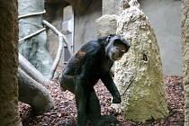 Pavilon evoluce, Zoo Ostrava. Ilustrační foto.