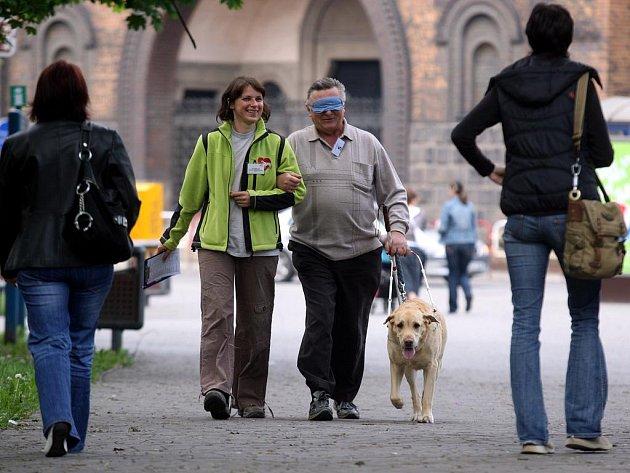 Soutěž slepeckých psů