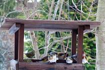 Ptačí sněm na krmítkách už vyhlíží jaro.