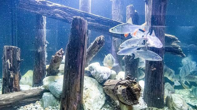 Obří naučné akvárium na 5 000 litrů vody v ostravském Landek Parku, 25. května 2019 v Ostravě.