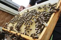 Včelaři. Ilustrační snímek