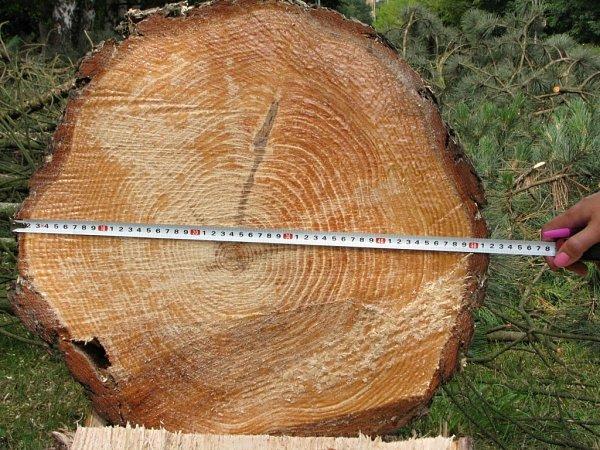 Vulici Zdeňka Štěpánka vPorubě se vtěchto dnech rekonstruuje vodovod, vmístě prací mu však stály čtyřicetileté stromy. Včera ráno je proto technici pokáceli.