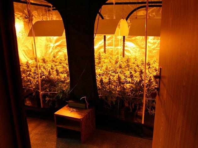 Policejní zásahová jednotka koncem června zadržela skupinu pěti mužů zBruntálska a Šumperska, která si výrobou a prodejem marihuany mohla vydělat až osm milionů korun.