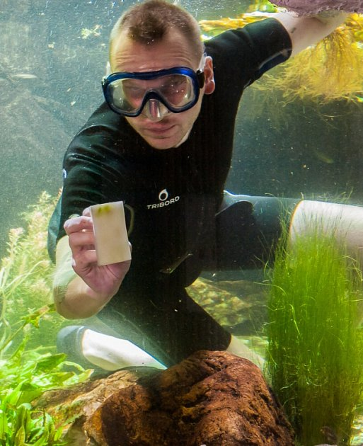 Čištění akvárií vostravské zoo.
