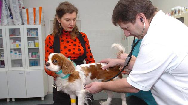 Veterinář Jan Nytra vyšetřuje psa, kterému operací zachránil život