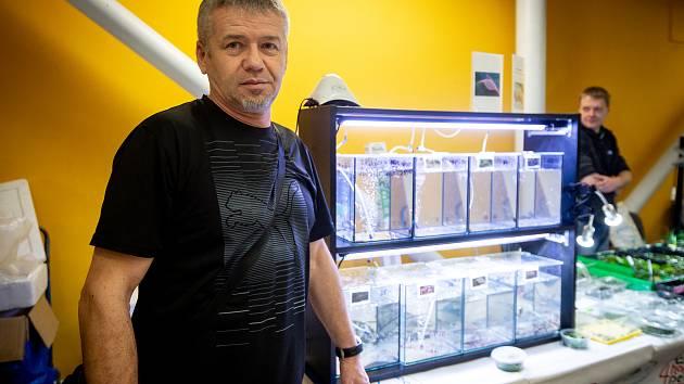 Fauna trhy na Černé louce v Ostravě.
