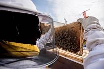 Včela, včelaři, včelí med. Ilustrační foto.