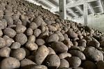 Tři až čtyři koruny za kilo brambor vypěstovaných našimi zemědělci! Za takovou cenu jsou v těchto dnech k mání ve čtyřech velkoskladech v České republice. Jeden z nich se nachází i v Moravskoslezském kraji. Produkce brambor, ilustrační snímek.