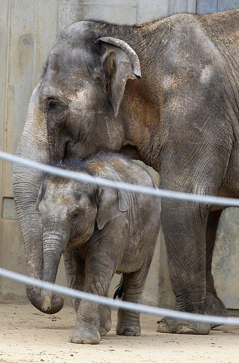 Sloní slečna Rashmi slaví dnes, 12. dubna 2012, své první narozeniny.