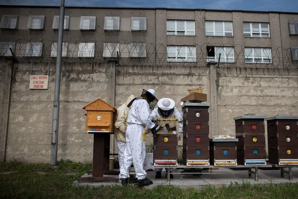 """Sklizeň medu v Heřmanické věznici, úterý 15. května 2018, Ostrava. Vězni zúročili svou celoroční """"včelí"""" práci."""