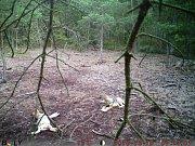 Ochránci přírody se každý rok snaží zmapovat výskyt šelem v Česku.