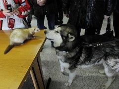 První nedělní fauna trhy v Ostravě neměly nouzi o návštěvníky.