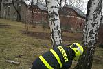 Odstraňování následků noční vichřice v Moravskoslezském kraji.