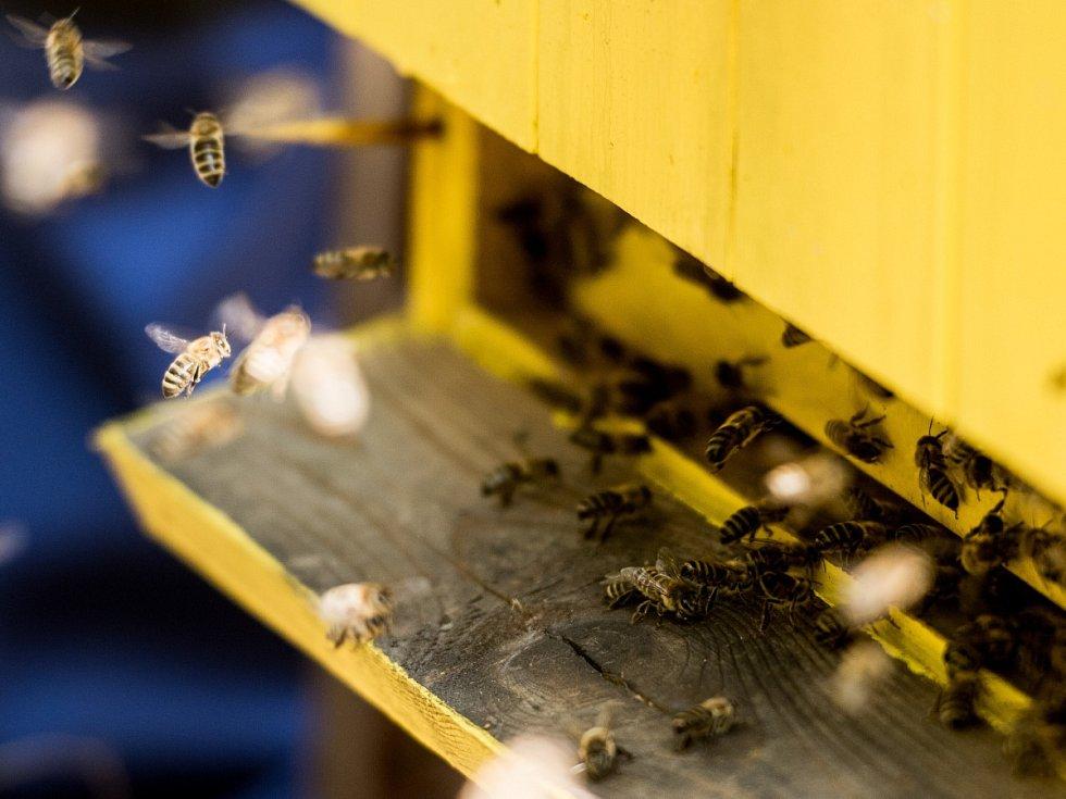 Včelařství je v Česku velmi rozšířené.