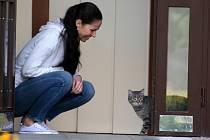 Majka je poněkud plachá kočka žijící (s povolením nájemníků) v okolí porubského domova Jany Kozákové. Ta patří k lidem, kteří v moravskoslezské metropoli pomáhají zvířatům v ulicích.
