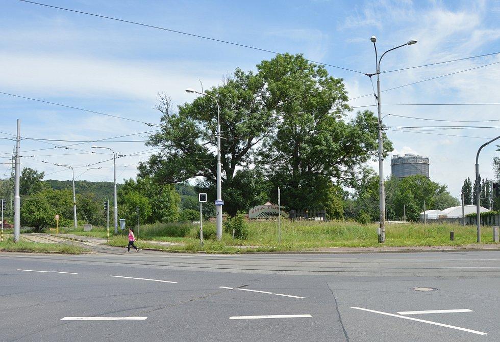 Za těmito stromy vzniklo parkoviště (pohled z ulice Slovenské).