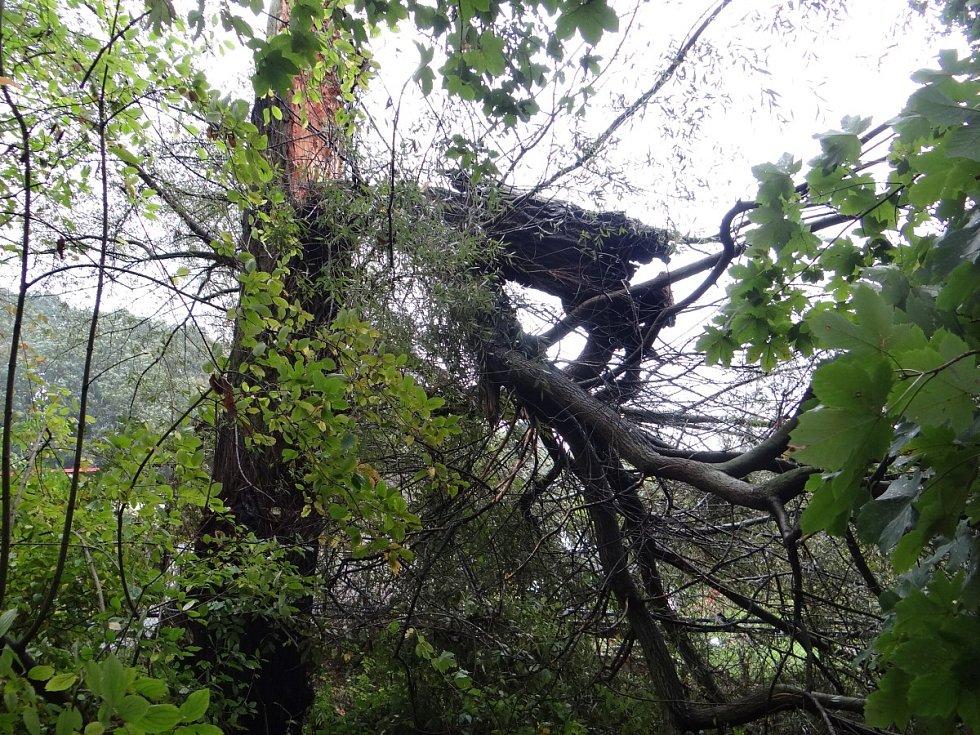 Odstraňování velkého pahýlu staleté vrby z plotu zahrádkářské osady U Korýtka.