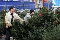 Zahájil prodej vánočních stromků