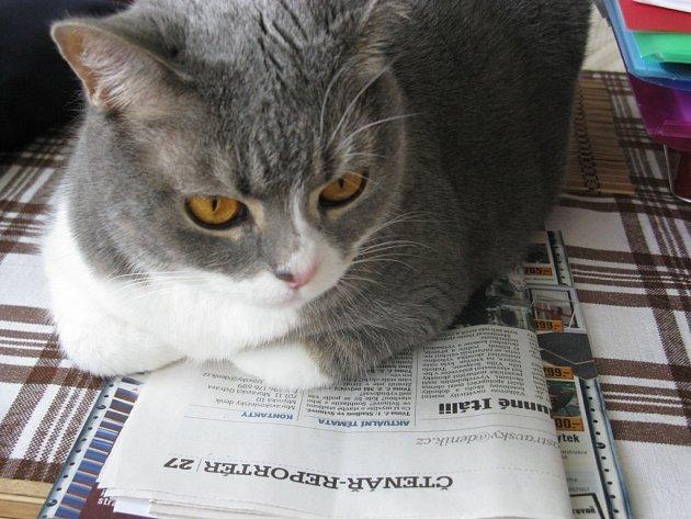 """1. Kočka Agátka. Ráda čte noviny. Z jejího výrazu jsem si odvodil: """"Doufám, že se příště dočtu taky něco o sobě!"""""""