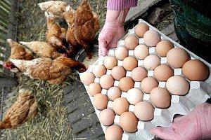 Vajíčka a drůbežárna