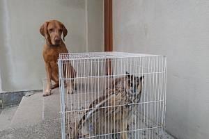 Profesionální hasič s loveckým psem zachránili zraněného výra na Novojičínsku.